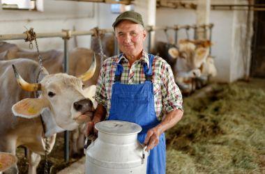 İnek Sütü