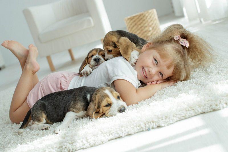 Evde Beslenebilecek Köpekler Köpek Besleme