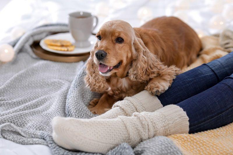 Evde Beslenebilecek Köpekler Cocker