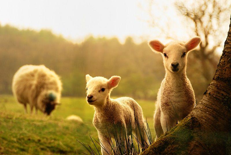 Hayvanları Koruma Günü Türkiye