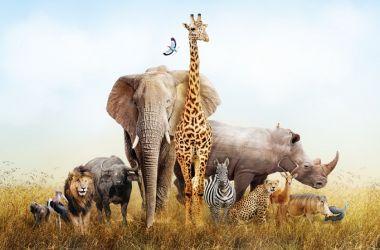 Nesli Tükenen Hayvanlar