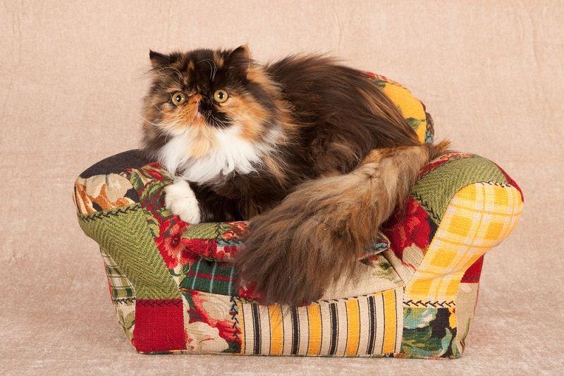 Patchwork Kedi Koltuğu