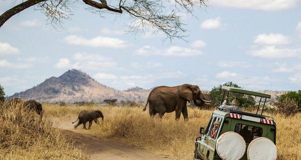 Safari Nedir?