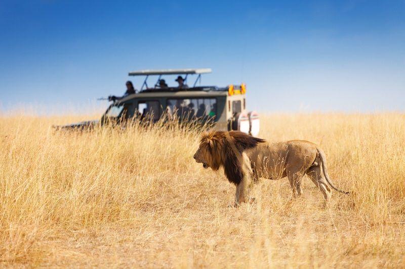 Safari Nedir Safari