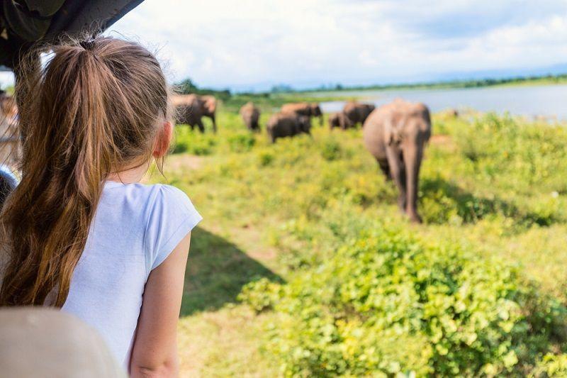 Safari Nedir Safari Hakkında