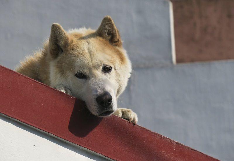 Sokak Hayvanları Hangi Sorunlar İle Karşılaşıyor 4