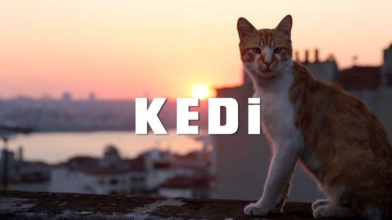 Vizyondaki Filmler Kedi