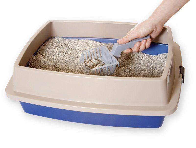 Yavru Kediler Kum Küreği