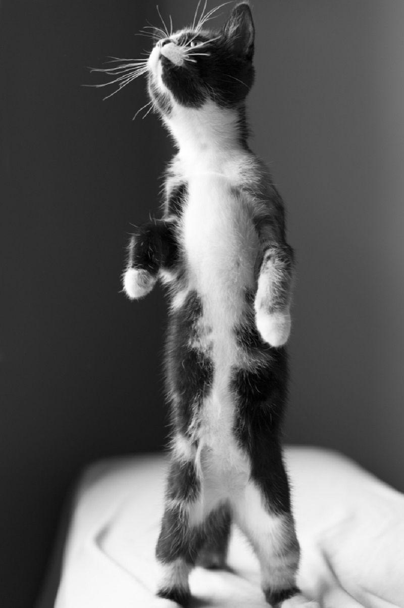 Yavru Kediler Ödül