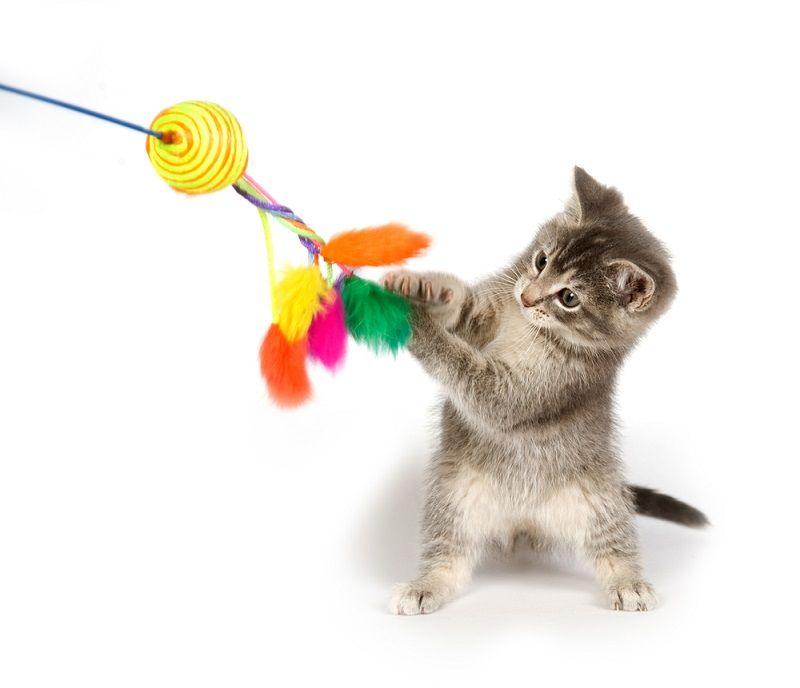 Yavru Kediler Oyuncak