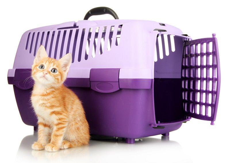 Yavru Kediler Taşıma Çantası