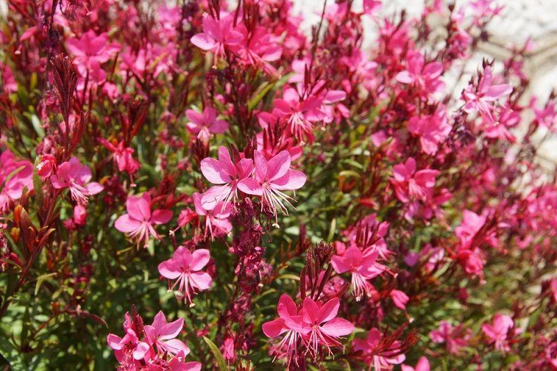 Yaz Çiçekleri Gavura