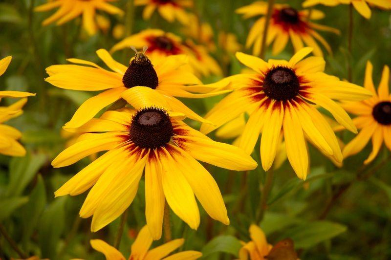 Yaz Çiçekleri Güneş Şapkası