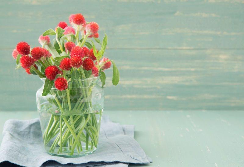 Yaz Çiçekleri Medine