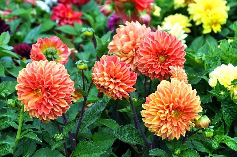 Yaz Çiçekleri Yıldız
