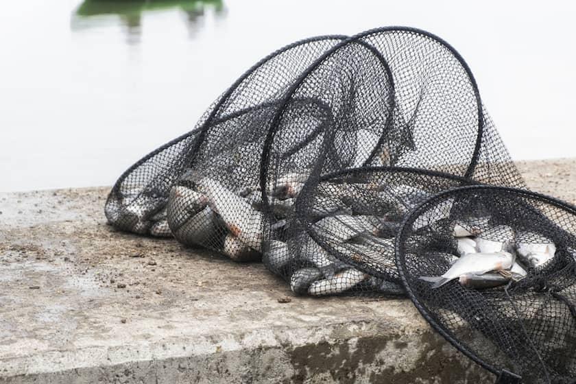 Ağ ile Balık Avı