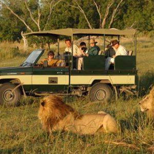 Aslanlarla safari de iyi bir fikir sanki!