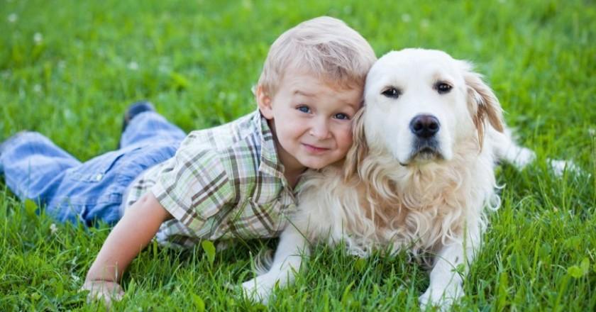 En Akıllı Köpek Cinsleri