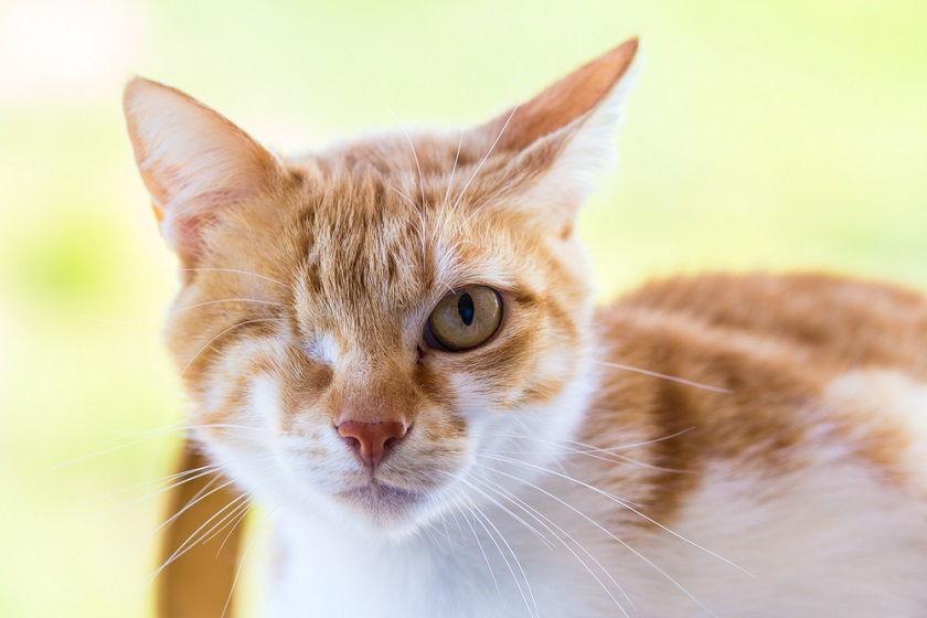 erkek kedi isimleri