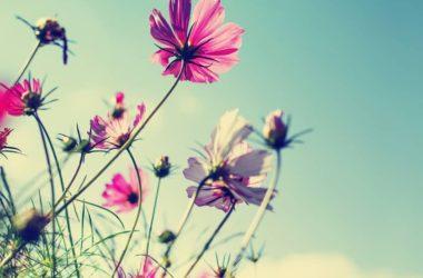 Yaz Çiçekleri