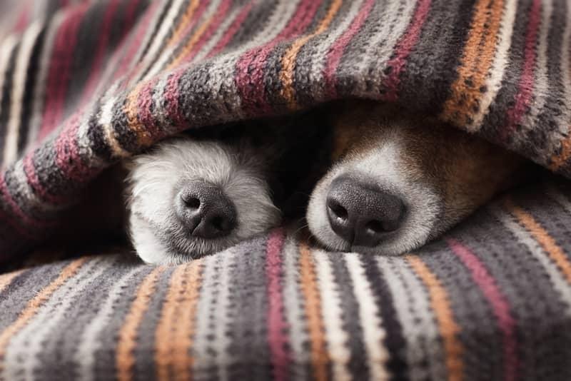 Soğuk Havada Köpek Bakımı