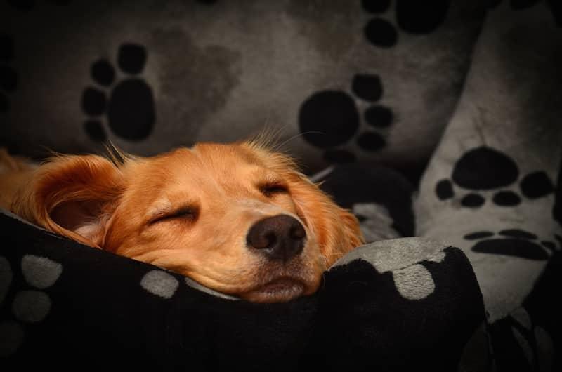 Rahat Köpek Yatağı