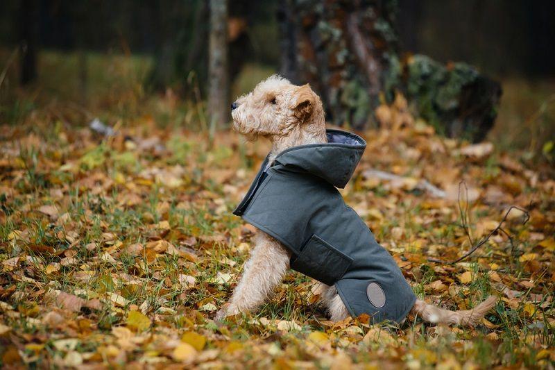 Soğuk Havalarda Köpek Bakımı