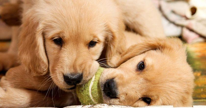Yavru Köpek Ürünleri