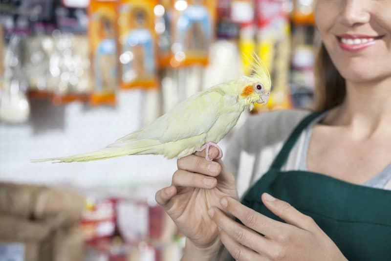 Papağan Satın Almak