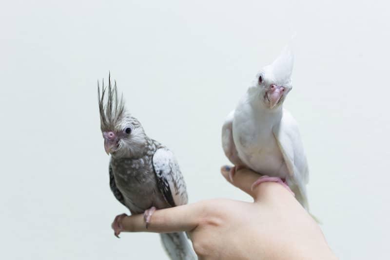 Papağan Eğitimi