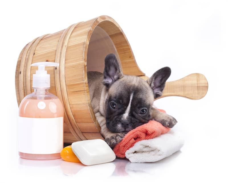 Köpek Şampuanı