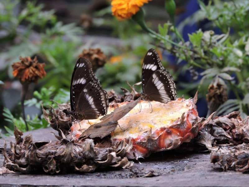 kelebek-parki