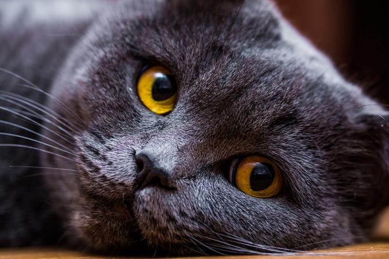 Kedi Evcil Hayvan