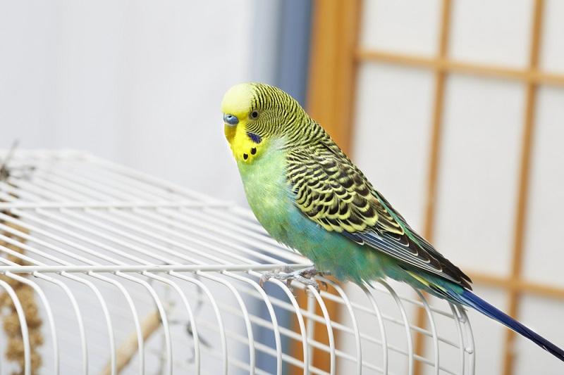 Ev Hediyeleri Kuş