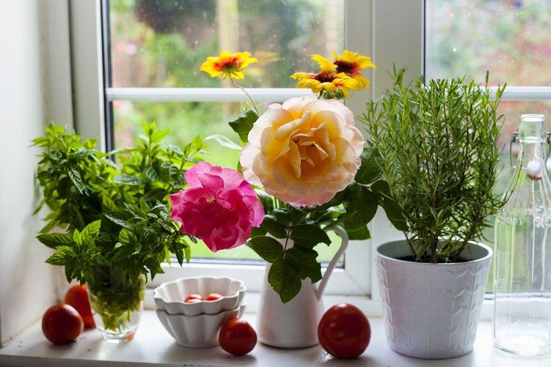 Evde Çiçek Bakımı