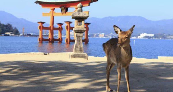 Japonya'nın Geyikleri