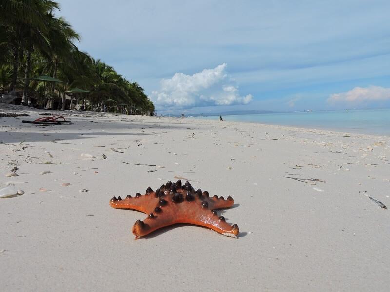 Bohol Adası Deniz Yıldızı