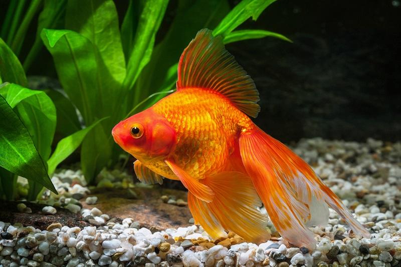 Genel Kültür Balık