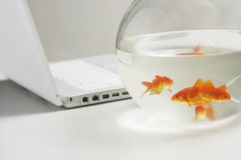 Ofis Malzemeleri Balık