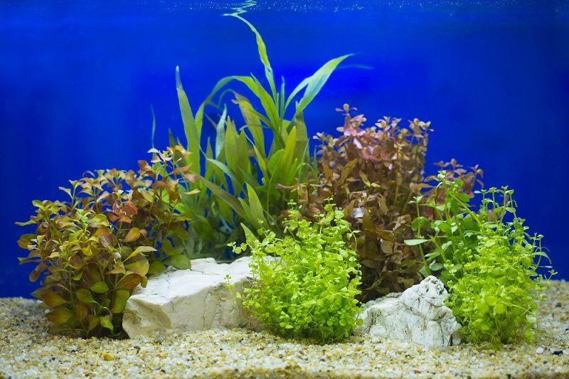 Akvaryum Malzemeleri Bitkiler