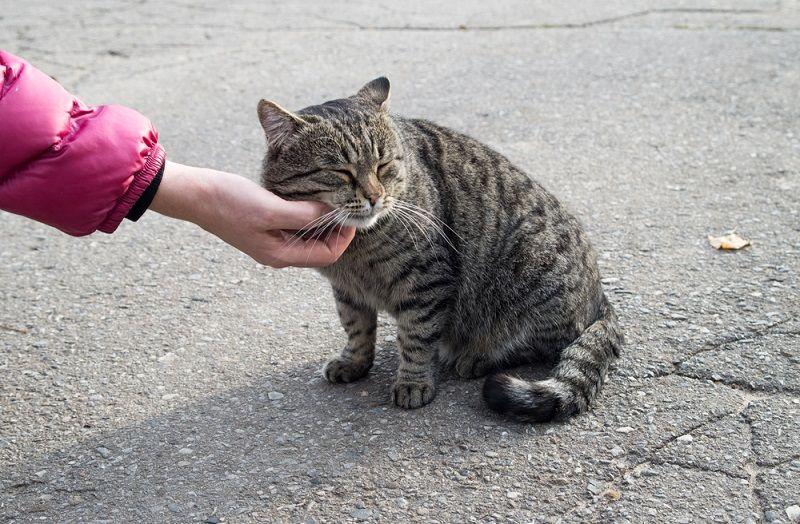 Sokak Hayvanları Sıcaklarda Yardım
