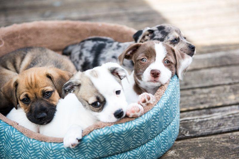 Etkinlik Takvimi Eylül Pets Day