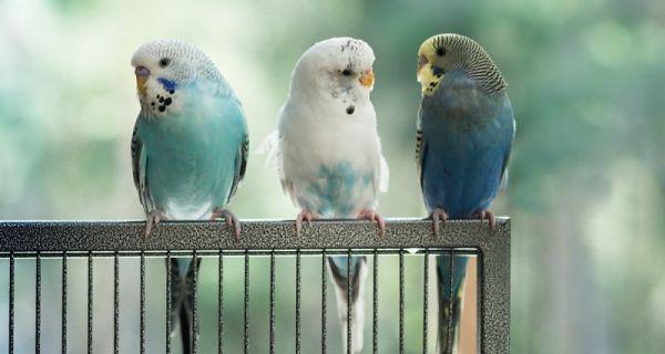kuş bakımı