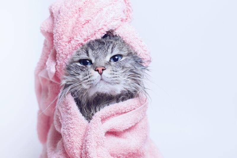 yavru kedi yıkanır mı