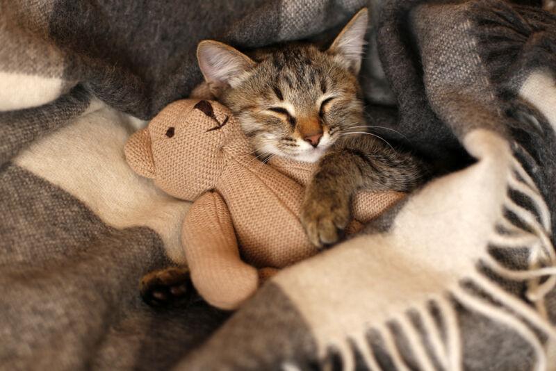 yavru kediler ne kadar uyur