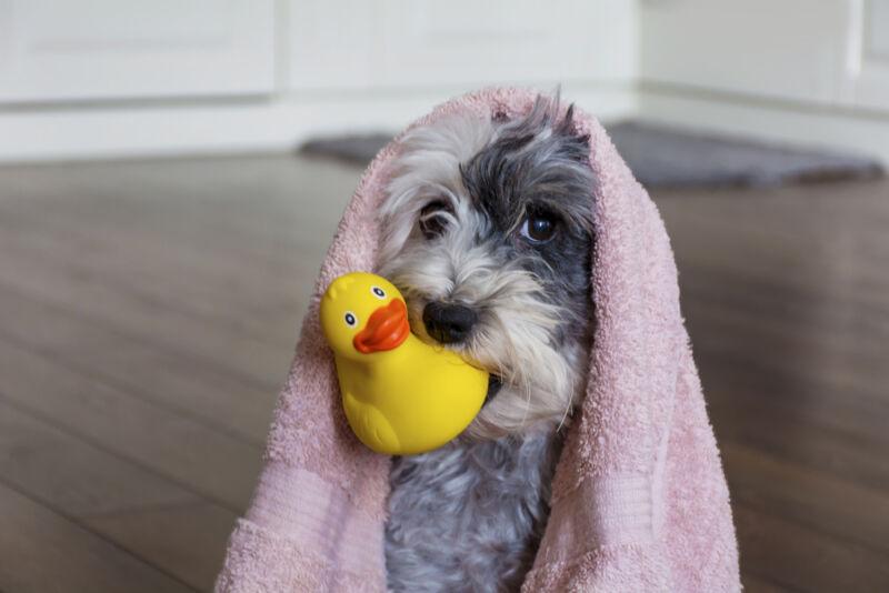 yavru köpek yıkanır mı
