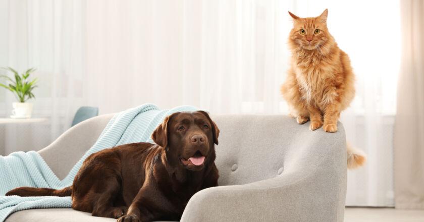 kedi tüyü, köpek tüyü