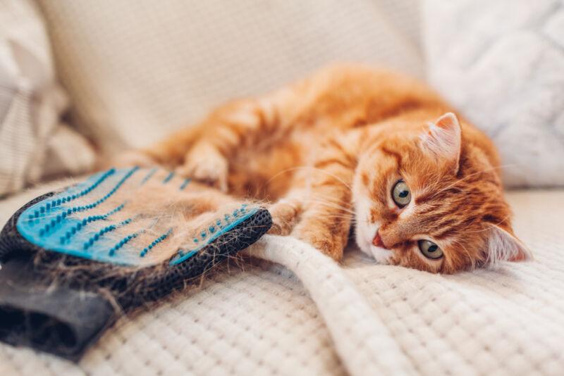 kedi tüy eldiveni
