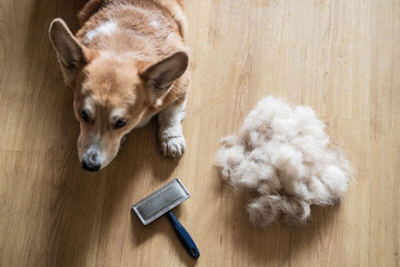 köpekler neden tüy döker