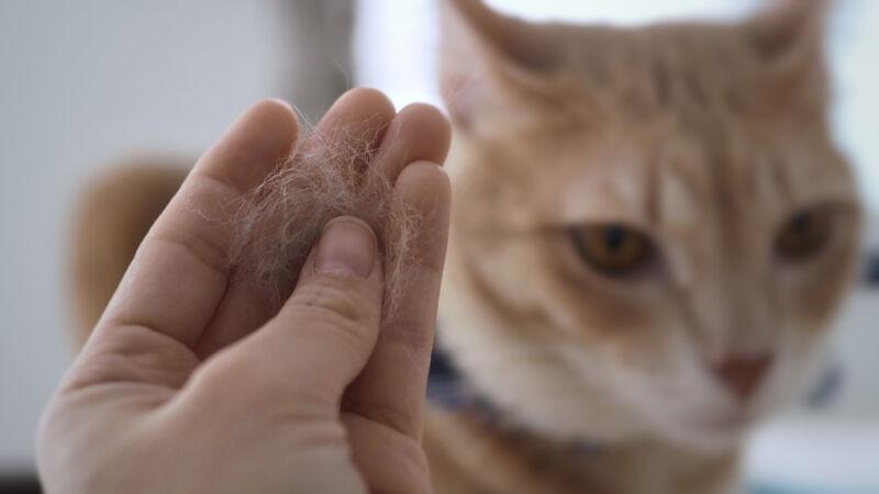 kedi tüyü neden dökülür